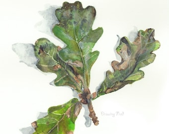 Oak leaves- Autumn cluster- high quality botanical print on archival paper