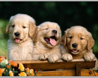 4 Dog Puppy Golden Retriever Dogs Puppies 6 Greeting Notecards/ Envelopes Set