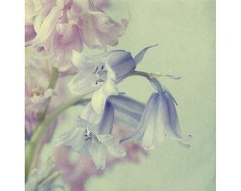 Blue Flower Photography,   Shabby Chic Wall Decor, Cottage Style, Flower Wall Art, Nursery Decor