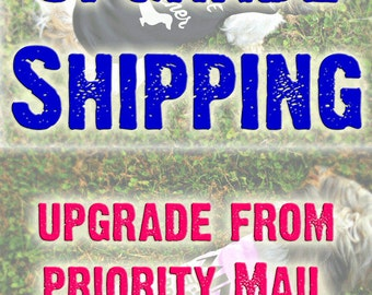 Expedited Shipping - Upgrade from Priority to Express Mail - Ships Out USPS Priority Express - Delivery is 1-2 Day Shipping Speed