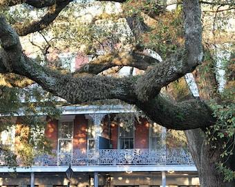 French Quarter Tree  Photo