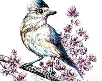 Tufted Titmouse - Pigmented India Ink Art Print