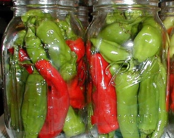 Hot Pepper Plant, Pepperoncini