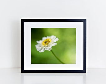 Flower Photography Bee Photo Chamomile Art Digital Download Wall Decor Photography Gift Ideas Printable