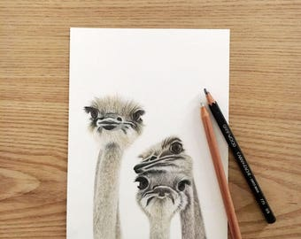 Ostrich drawing ostrich art animal drawings ostrich poster nursery decor home decor wall decor animal safari drawings