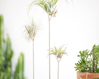 Set of 4 | Speckled White Air Plant Stand - tillandsia, plant stand, terrarium, modern, succulent,  zen, office gift, desk accessory
