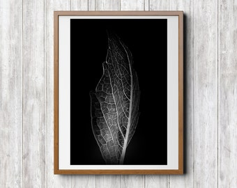The Leaf, Print Download, Photography, Black and White, Stilllife, Photo Art, Modern Art, Abstract, Minimal, Home Office Hotel Decor