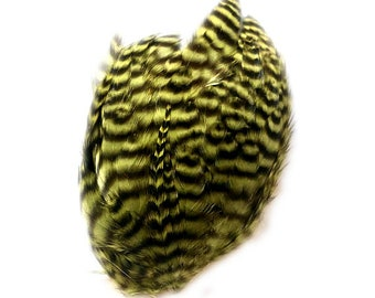 Olive Green Black Striped Grizzly Striped FEATHER PAD for crafting or fly tying Rooster feathers