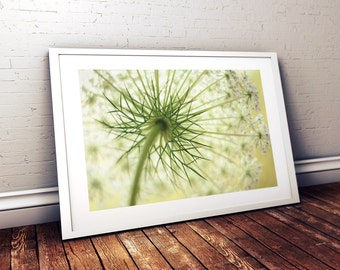 Feminine Bedroom Wall Art, Queen Anne's Lace Photography, Flower Photography, Nature Photography, Wildflower Photography