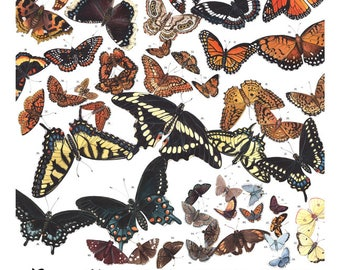 Butterflies of Maine, signed print