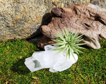 Air Plant Quartz Crystal   Tillandsia   Crystal Garden   Quartz   Air Plant Gift   Natural Crystal   Quartz Crystal   Healing Crystals