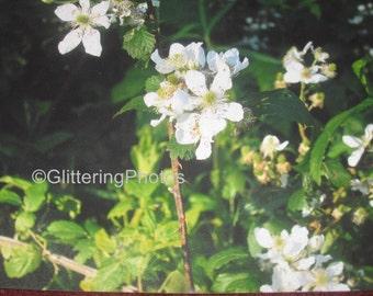 White Wildflowers, Blooming Flower, Spring, Wathen Park, Jeffersonville, Indiana, Fine Art Print, Nature Photography, 8 x 10, Glitter