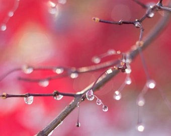 Raindrops on branches photograph, Nature's jewelry , brown branches, red leaves, cold rainy fall day, nature, photography, fine art photo