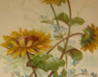 Pretty Embossed Vintage Floral Postcard (Black Eyed Susans)