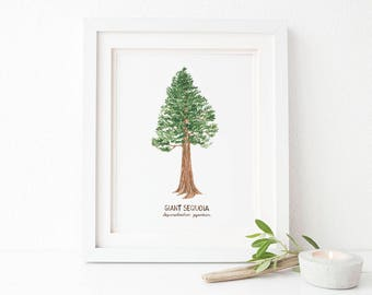 California Redwood Art Print / Giant Sequoia Art / Watercolor / Natural History Home Decor / California State Symbols / California Art