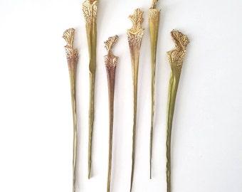 Dried carnivorous, sarracenia stems. (1 bunch of 10 stems)