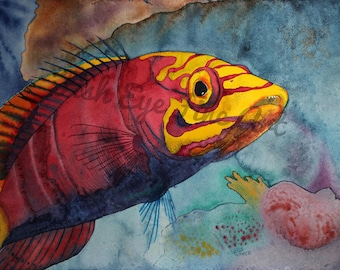 Mystery Wrasse Fish Watercolor Tropical Fish Art Painting High Quality Print by Chris Turnier