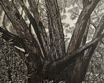A Forest Tree  print 10.5 x 13.5