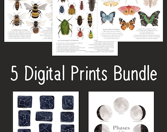 5 Set Printable Science Art  Bundle -  Digital Educational Prints - 8 x 10 and A4 Size - Bees, Lunar Phases, Moths, Beetles, Constellations
