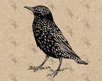Vintage image Blackbird Bird Clip Art Design Transfer Digital File Instant Download  Stickers Burlap Fabric Transfer Iron On Pillows 300dpi