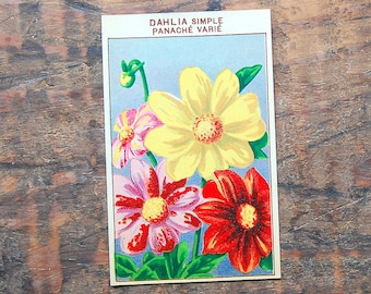 Original Vintage Flower Seed Label, Lithograph, French, Dahlia, New Old Stock