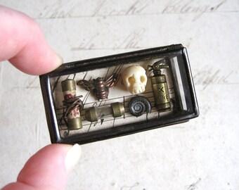 Pocket Museum - Glass Box Assemblage Curiosity Art Object