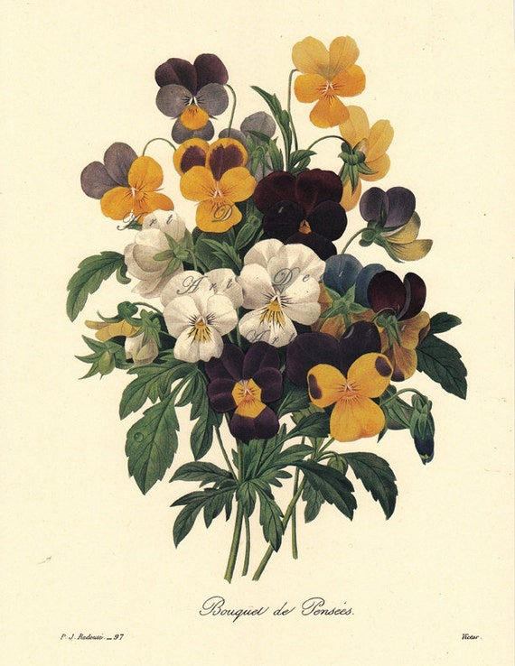 A Bouquet of Pansies