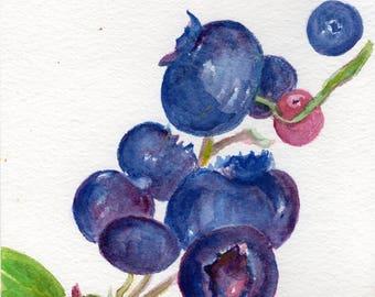 Blueberries Watercolors Painting original ART, 5 x 7, Fruit watercolor, original watercolor painting of blueberries, kitchen decor