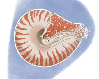 Curiosities of the Sea: Nautilus