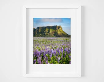 Iceland landscape print - Travel photography - Large wall art - Nature print - Fine art photography - Iceland photos - Mountain lupines art