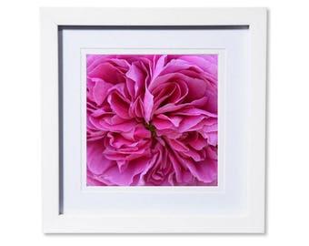 Pink Rose Petals Photo Print or Canvas