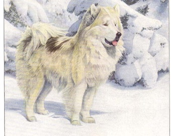 1919 Print North Greenland Eskimo Dog in Snow by Louis Agassiz Fuertes