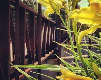 Flint Michigan photography, Flint River, footbridge, lilies, urban decay, urban exploration, matted photo