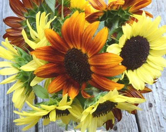 Sunflower Seeds Organic Sunflowers Large Packet Mixed Color Sunflower Seeds Heirloom Seeds