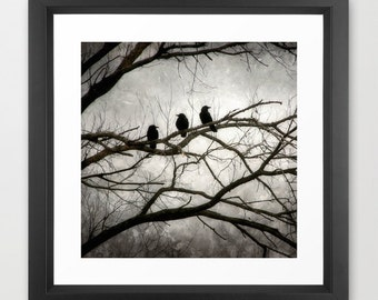 Crow Photography, Black Crow Print, 3 Crows, Mysterious Crow Print, Crow Art, Surreal, Dark, Black, Silver, White, Moonlit