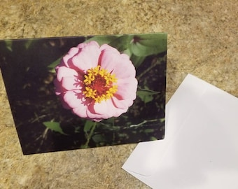Floral pink zinnia  greeting card