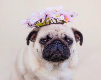 The Bohemian Queen - Pug Print, Dog Picture, Whimsical Art, Dreamy Bohemian Decor, Pug Photography, Gifts For Her, Photo Gifts, Pug Life
