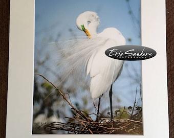 Egret Primping