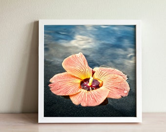 Tropical Hibiscus Floating in clouds - Photo Print Canvas Wood Acrylic Metal