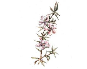 Botanical Flower Drawing