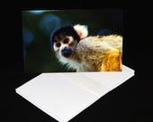Squirrel Monkey Blank Gre...