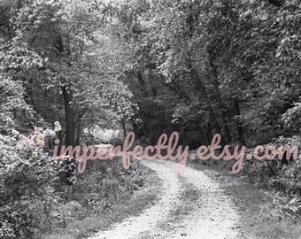 PATH IN WOODS photo magnets - Iowa forest scenery black and white print - from film!