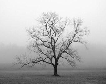 black and white photography, trees, tree, tree photography, tree print, lone tree, fog, landscape photography, foggy, Velvet Sunrise