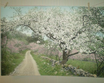 """XL-1910 Wallace Nutting """"A Canopied Road"""" scenic hand-colored photo- X-Large tinted photo of country lane and apple trees- Nutting art photo"""