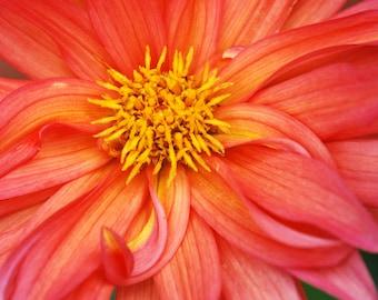 Photograph: Orange Flower