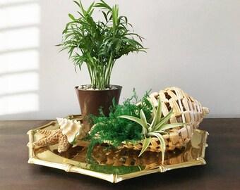 Conch Shell Planter /  Tillandsia Planter / Air Fern Planter / Vintage Seashell Planter / Beach Cottage Decor / Raffia Shell
