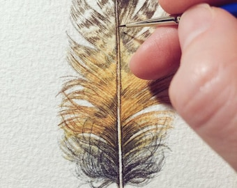 Owl feather painting - Original Watercolour study