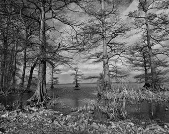 ReelFoot Lake Trees