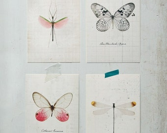 Insect Study Postcard Set