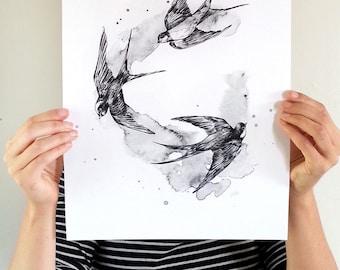 Black Swallows bird print A3 - Contemporary art print of pencil and watercolour drawing